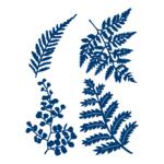 Ferns (D590)